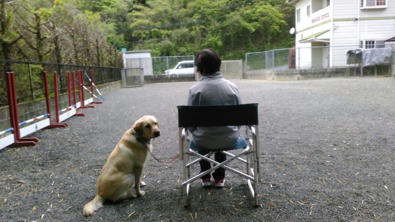 ハル君・・・Chair  training